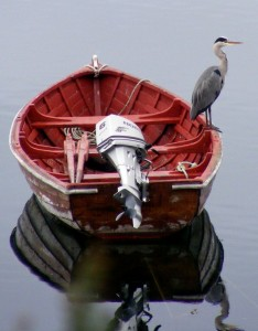 heron at old dornie